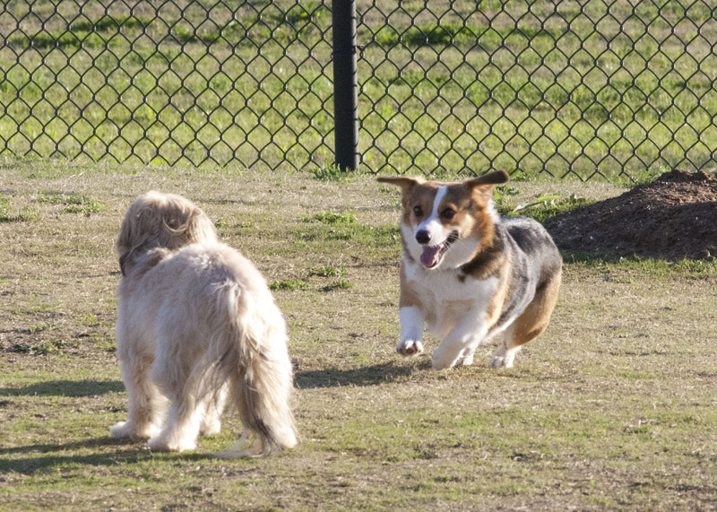 Dog Park - March 12