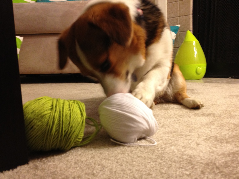 Conney playing with yarn
