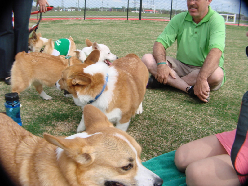 Corgi Meetup - March 17 Part 1