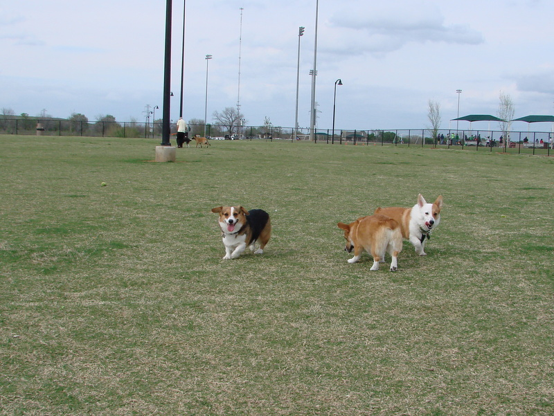 Corgi Meetup - March 17 Part 2