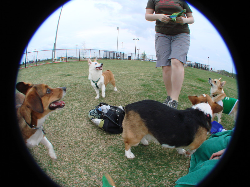 March 17 - Corgi Meetup Part 3